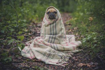deprime-chien