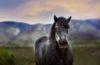 tondre-cheval