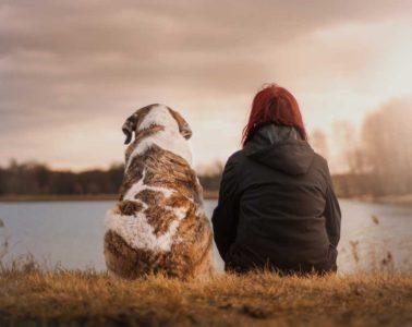 famille-accueil-chien