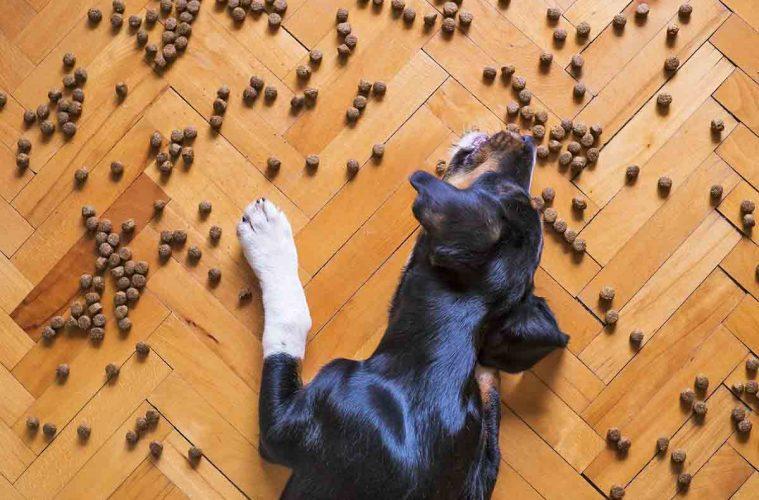 croquette-chien