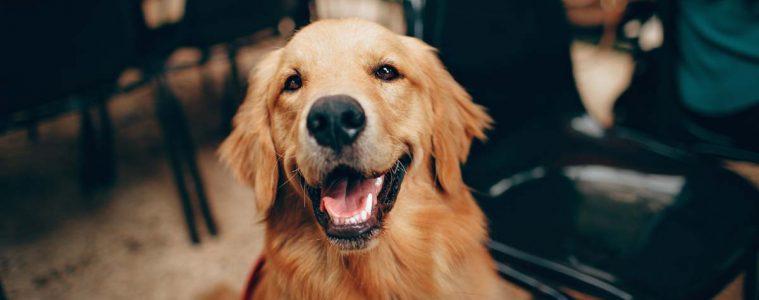 assurer-chien-obligatoire