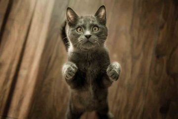 chat-sortir-maison