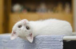 maison-chat