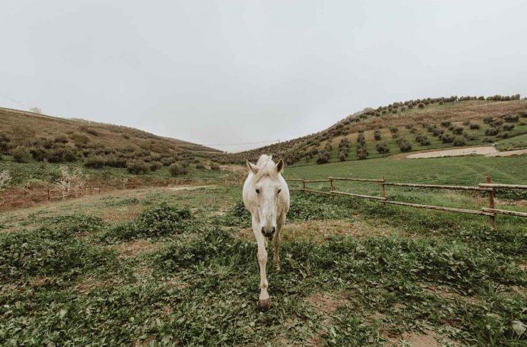 therapie-cheval