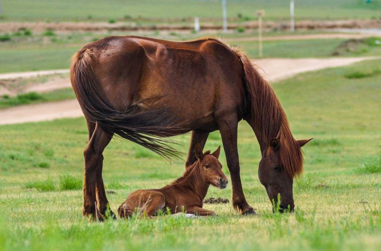 reglementation-abri-chevaux