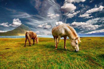 taille-abri-chevaux