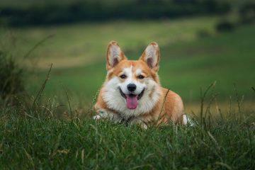 declaration-chien-assurance